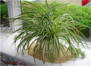 Самые удачные растения для дома, согласно фен шуй